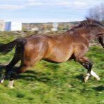 Mindas Kraniosakralterapi och massage för häst / människa