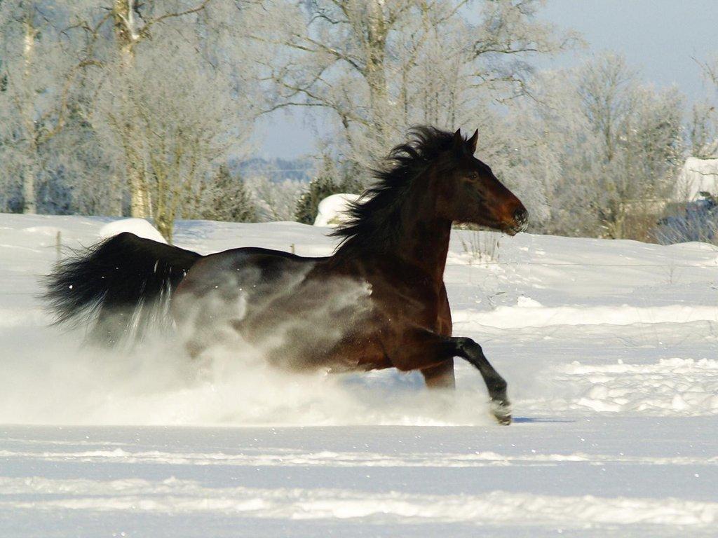 hästglädje